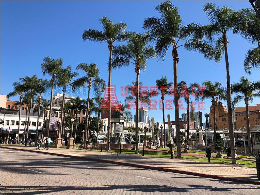 Palmen San Diego
